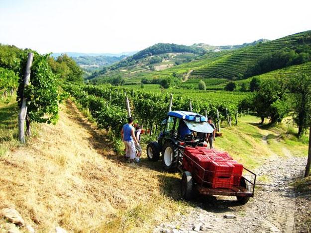 Wijn uit Bosnië-Herzegovina