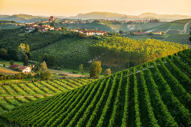 Асти, Пьемонт, Италия -виноградники
